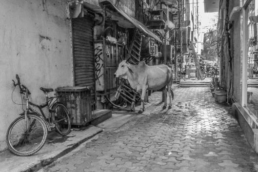 # Obligatory cow photo.